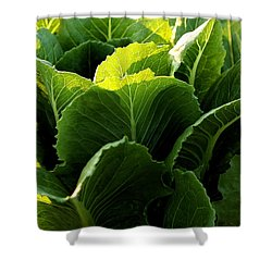 Layers Of Romaine Shower Curtain by Angela Rath