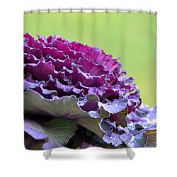 Layers Of Wet Beauty Shower Curtain by Sandi OReilly