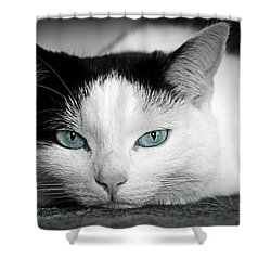 Lazy Cat Shower Curtain by Claudia Moeckel