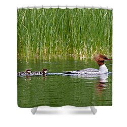 Lazy Swim Shower Curtain by Brent L Ander