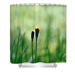 Le Centre De L Attention - Green S0101 Shower Curtain by Variance Collections