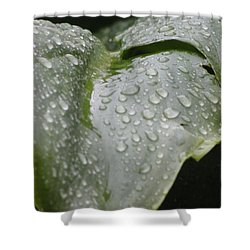 Shower Curtain featuring the photograph Leafy Greens by Tiffany Erdman