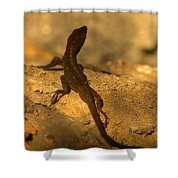 Leapin' Lizards Shower Curtain by Trish Tritz