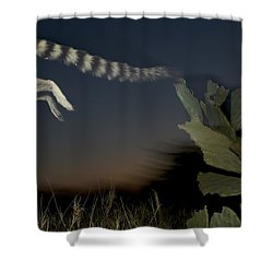 Leaping Ring-tailed Lemur  Shower Curtain by Cyril Ruoso
