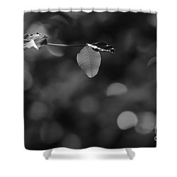 Leaves And Light Shower Curtain