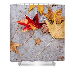 Leaves On The Sidewalk Shower Curtain