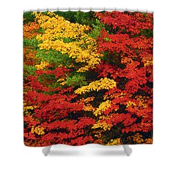 Leaves On Trees Changing Colour Shower Curtain by Mike Grandmailson