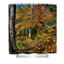 Leaving Cary Lake Shower Curtain by David Patterson