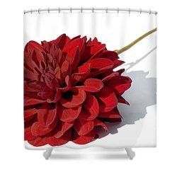 Leggy Dahlia  Shower Curtain by Susan Smith