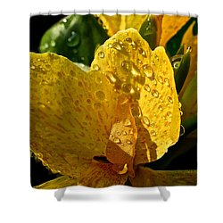 Lemon Drop Canna Lily Shower Curtain by Susan Herber