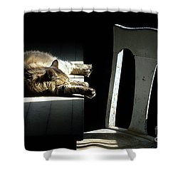 Let Sleeping Cats Lie Shower Curtain by Bob Christopher