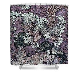 Lichen Pattern Series - 57 Shower Curtain by Heiko Koehrer-Wagner