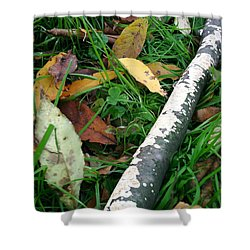 Lichen Recycling Shower Curtain by Trish Hale