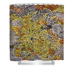 Lichens Shower Curtain by Heidi Smith
