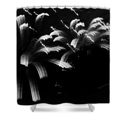 Licorice Sky Shower Curtain by DigiArt Diaries by Vicky B Fuller