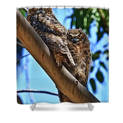 Lifes A Hoot Shower Curtain