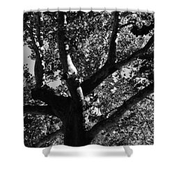 Light And Dark Shower Curtain by Brian Hughes