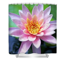 Light Pink Water Lily Shower Curtain by Kicka Witte