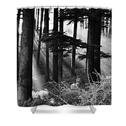 Shower Curtain featuring the photograph Light Through The Trees by Don Schwartz