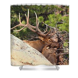 Like Father - Like Son Shower Curtain by Shane Bechler