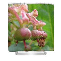 Shower Curtain featuring the photograph Lilly Of The Valley Close Up by Kym Backland