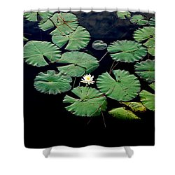 Lily Alone Shower Curtain by May Photography