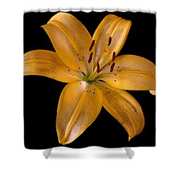 Lily Shower Curtain by Karen Harrison