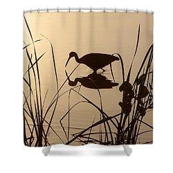 Limpkin At Dawn Shower Curtain