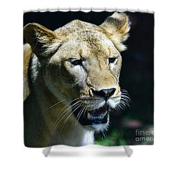Lion - Endangered Species - Wildlife Shower Curtain by Paul Ward