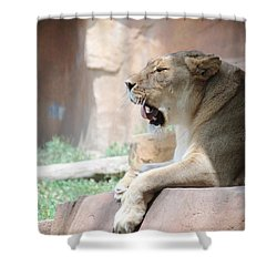 Lion At Brookfield Zoo In Chicago Il Shower Curtain