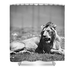 Lion King In Black And White Shower Curtain