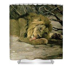 Lion Reclining In A Landscape Shower Curtain by Wilhelm Kuhnert