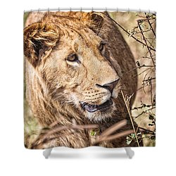 Lioness Hiding Shower Curtain