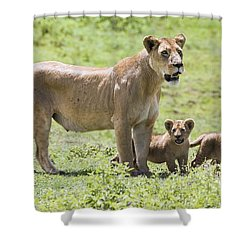 Lioness With Cubs Shower Curtain by Carson Ganci