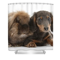 Lionhead-cross Rabbit And Dachshund Pup Shower Curtain by Mark Taylor