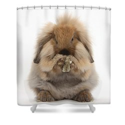 Lionhead X Lop Rabbit Grooming Shower Curtain by Mark Taylor