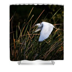 Shower Curtain featuring the photograph Little Blue Heron Before The Change To Blue by Steven Sparks