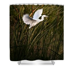 Shower Curtain featuring the photograph Little Blue Heron On Approach by Steven Sparks