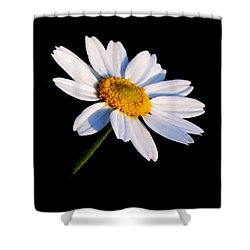 Little Daisy Shower Curtain by Karen Harrison