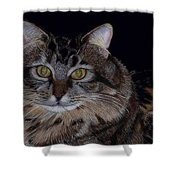Little Girl - Maine Coon Cat Painting Shower Curtain by Patricia Barmatz