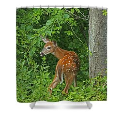 Little One Shower Curtain by Karol Livote