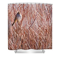 Little Sparrow Shower Curtain by Sabrina L Ryan