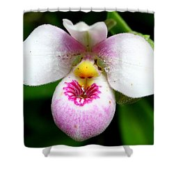 Little White And Pink Orchid Shower Curtain