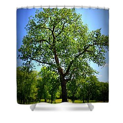 Old Green Tree Shower Curtain