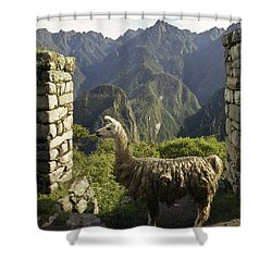 Llama On The Inca Trail Shower Curtain by Darcy Michaelchuk