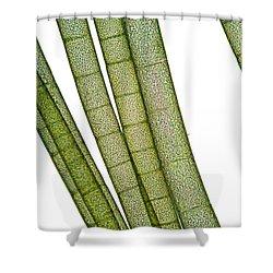 Lm Of Tubular Algae Shower Curtain by Raul Gonzalez Perez