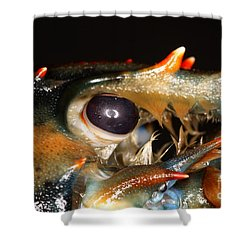 Lobster Eye Shower Curtain by Ted Kinsman