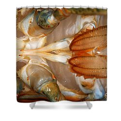 Lobster Male Sex Organs Shower Curtain by Ted Kinsman