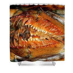 Lobster Mouth Shower Curtain by Ted Kinsman
