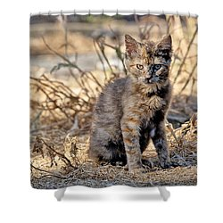 Shower Curtain featuring the photograph Lone Feral Kitten by Chriss Pagani